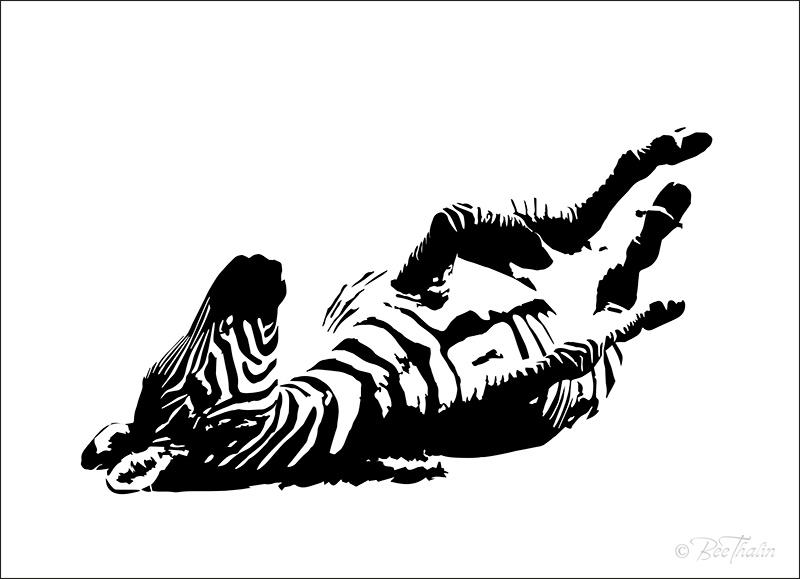 Zebra rullar