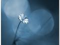 Blå skymning
