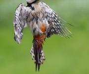 Dränkt fågel