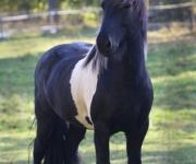 Häst i hagen