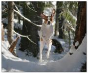 Fart i skogen