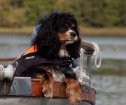 Hund på sjön 2