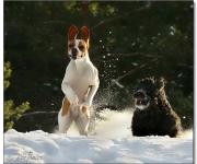 Fellie och Thelma i snön