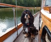 Hund på sjön 3