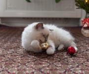 Kattunge med julkulor