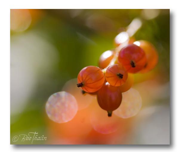Sommarbär