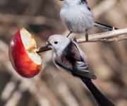 Äppelmes