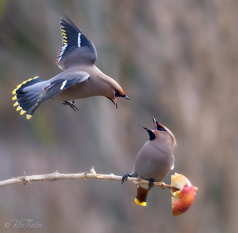Stick innan jag flyger på dig!