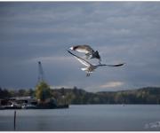 Flyguppvisning i hamnen