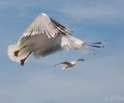 Fågelstreck
