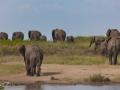 elefanter serengeti tanzania