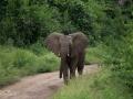 elefant i Lake Manyara, Tanzania