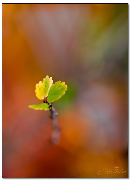 Tavlor - makro - The Leaf
