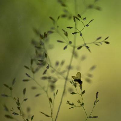 Liten fluga på strå