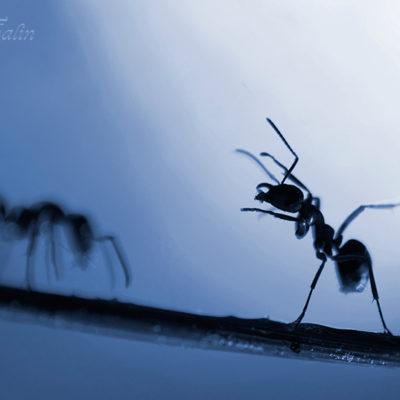 Sportcoachen peppar en deppad myra