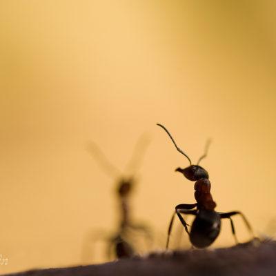 Myra som inte är ensam. Passar bra till någon som mist någon. Finns även som kort.