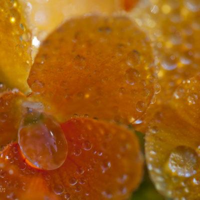 Tavla - Orange