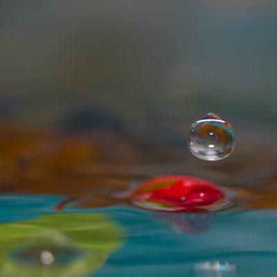 Tavla- Rosenvatten