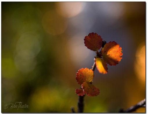 Löv i höstens underbara färger