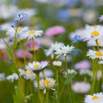 Tavla - Blommande äng