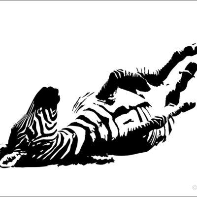 Tavlor - art - zebra rullar