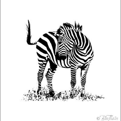 Tavlor - art - Blyg zebra