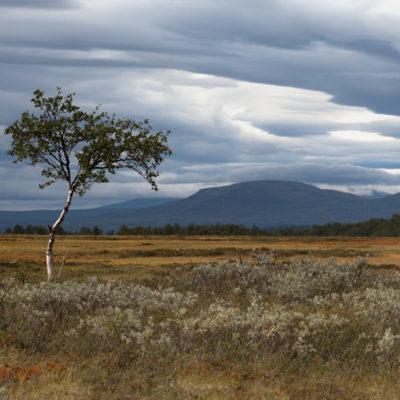 Tavla - Trädet på fjället