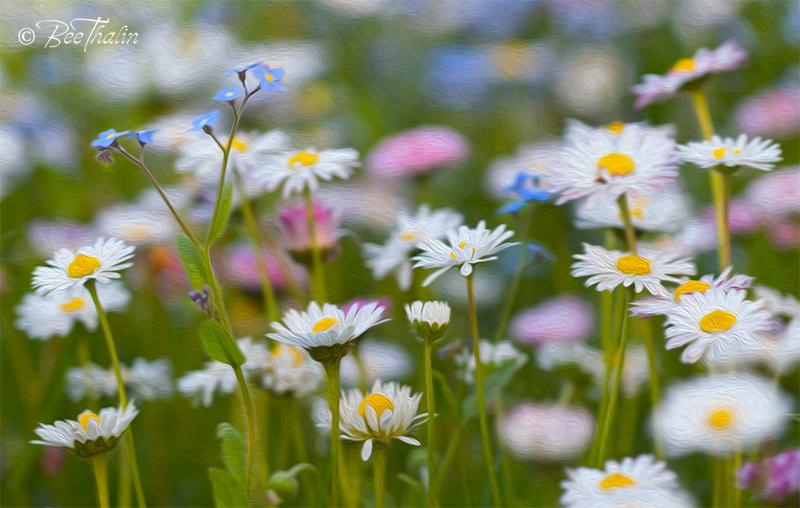 Bildresultat för blomsteräng