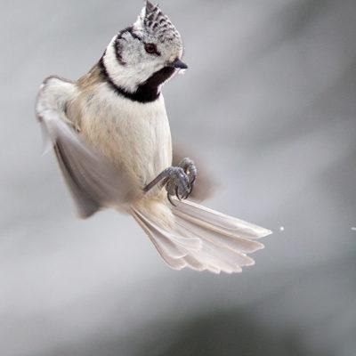 Bee Thalin Photo Art - Tavla - Tofselhjalten