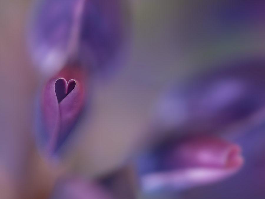 Romantik i trädgården