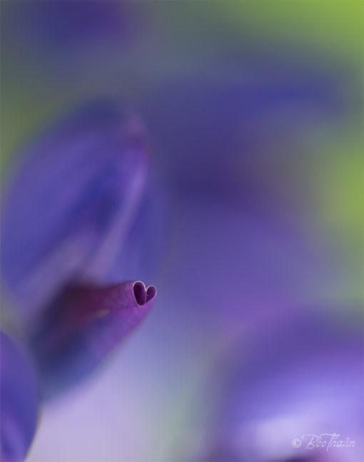 Blommande hjärta