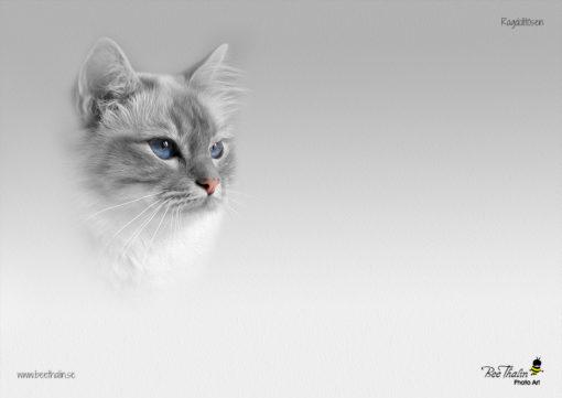 Bordstablett katt