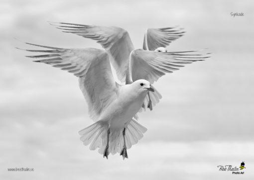 Bordstablett sjöfåglar i harmoni