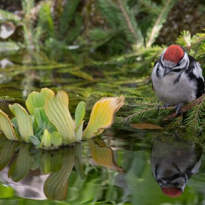 Spegel spegel i vattnet där...